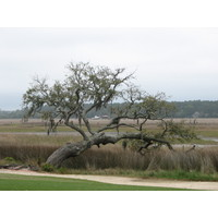 All of the six golf courses at The Landings, near Savannah, Georgia, have engaging marsh views.