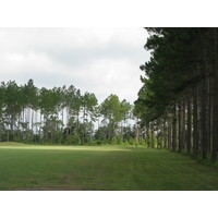 The 15th hole at Lakeview Golf Club in Blackshear, Ga., is a dogleg right, lined with pine trees down the right side.